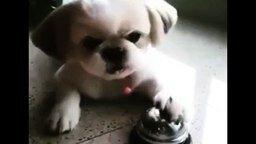Смотреть Хозяин на побегушках у своего пса