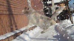 Смотреть Весёлый кот ловит снежки