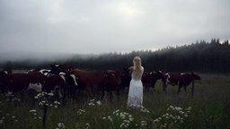 Смотреть Как созвать стадо коров