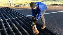 Спас кенгурёнка смотреть видео прикол - 1:25