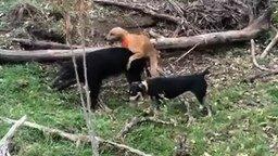 Смотреть Неловкий момент на охоте