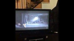 Смотреть Реакция собаки на фильм ужасов