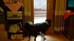 Смотреть Пёс впускает кошку домой