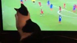 Смотреть Шерстяной любитель футбола