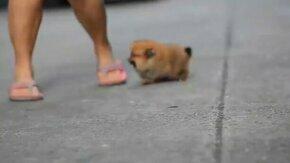 Смотреть Очень трогательный щенок
