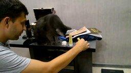Смотреть Кот хулиганит с хозяином