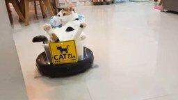 Кот катается на пылесосе смотреть видео прикол - 2:57