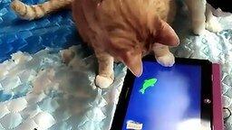 Смотреть Кот рыбачит на планшете