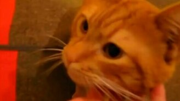 Смотреть Коты встречают людей