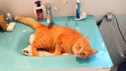 Смотреть Массаж щёткой для кошки