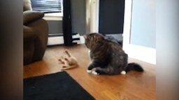 23 кошки, которые подарят вам позитив смотреть видео прикол - 1:33