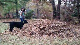 Смотреть Собаки против осенних листьев