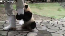 Панда-хулиганка смотреть видео прикол - 1:21