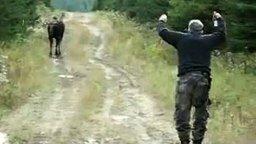 Смотреть Охотник манит лося