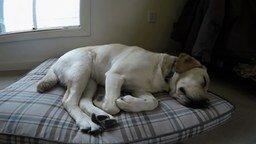 Смотреть Год из жизни одной собаки