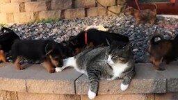 Смотреть Щенки атакуют кота