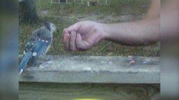 Смотреть Птичка прилетела подкрепиться
