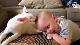 Взаимная любовь мальчика и кота смотреть видео прикол - 0:47