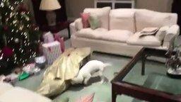 Хозяин - лучший подарок для пса смотреть видео прикол - 1:02