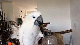 Попугай, который любит лимонад смотреть видео прикол - 2:31