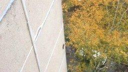 Смотреть Белка на стене многоэтажки