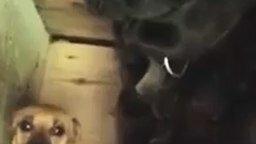 Смотреть Прятки в будке