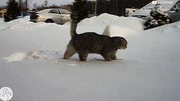 Смотреть Первые встречи со снегом