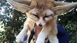 Смотреть Сборка фотоприколов с животинкой в видео