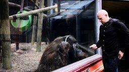 Фокус для орангутана смотреть видео прикол - 1:17