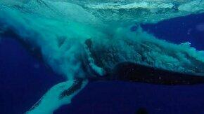 Смотреть Захватывающий прыжок кита