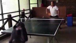 Смотреть Шимпанзе-теннисистка