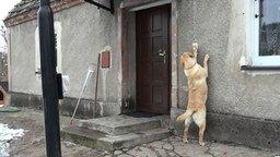 Пёс звонит в дверь смотреть видео прикол - 1:26