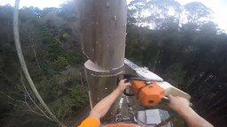 Смотреть Зрелищное спиливание высоченного дерева