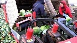 Смотреть Машины для сбора урожая