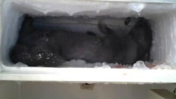 Смотреть Норка размораживает холодильник