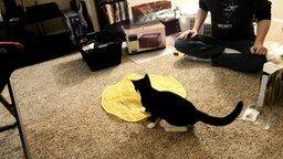 Котёнок и новая игрушка смотреть видео - 1:16