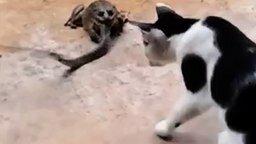 Смотреть Змея против лягушки и кошки