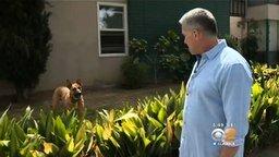 Смотреть Хозяин с собакой спасли колибри