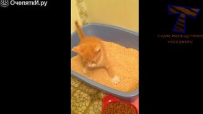 Приколизмы с котятами смотреть видео прикол - 5:21