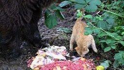 Смотреть Дружба медведя и кота