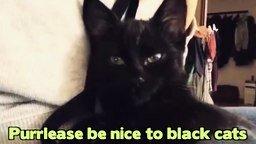 Смотреть Жизнь чёрных котов