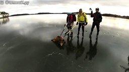 Смотреть Помогли кабану на льду