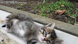 Смотреть Маленький озорной котёнок