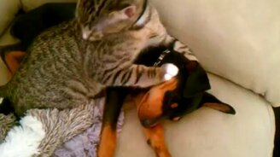 Котёнок жалеет щенка