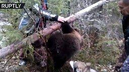 Смотреть Спасли медвежонка