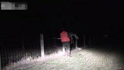 Смотреть Спас застрявшего оленёнка