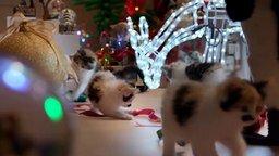 Смотреть Кошки-разрушительницы