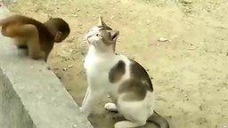 Обезьянки против кошек смотреть видео прикол - 1:47