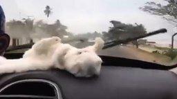 Белоснежный котёнок и дворники