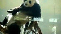 Смотреть Поп Панда
